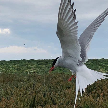 farne islands boat trips prices golden gate farne island boat trips seahouses 2019 all