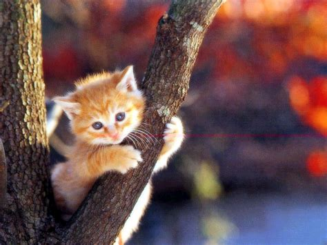 wallpaper cats baby baby animals images baby kittens hd wallpaper and