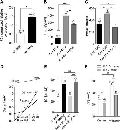 an autocrine neuronal interleukin 6 loop mediates chloride