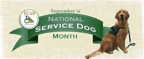 how to get involved with service dogs ecad ecad for national service month