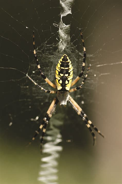 Garden Spider Features Garden Spider Web Appearance Characteristics Of Garden