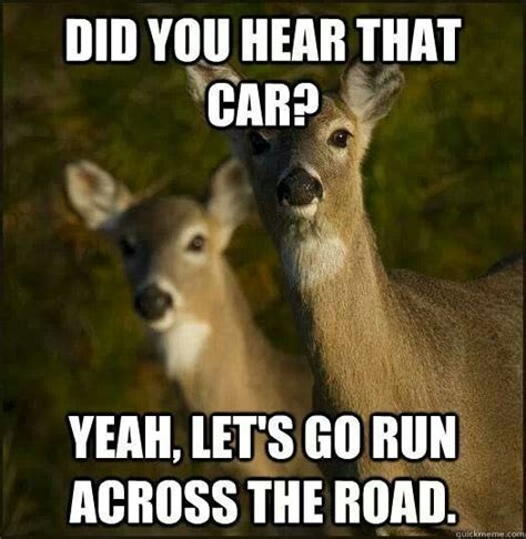 Deer Hunting Meme - yep deer play chicken things 2 pinterest