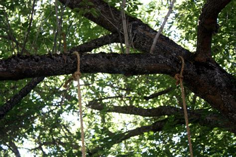 how to tie a rope swing to a tree diy tree swing to make with your family for the backyard