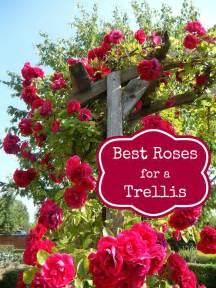 best roses to use in an archway or trellis foodie