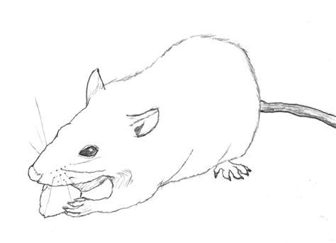 pencil sketch rat by ryusuta on deviantart