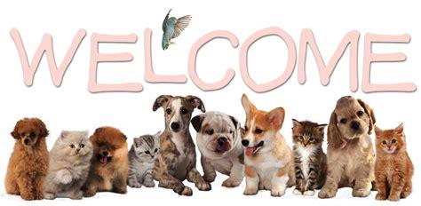 creature comfort animal clinic vet clinic in hendersonville flat rock nc animal hospital