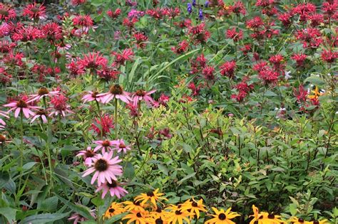Gardening For Wildlife The Joys Of Gardening For Wildlife Leslie Abram Photography