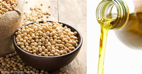 healthy fats soybean soybean another harmful ingredient in processed foods