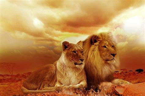 imagenes animal espiritual animal espiritual le 227 o viver natural