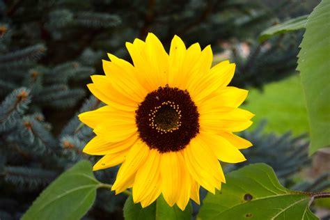 gambar gratis musim panas daun taman bunga flora