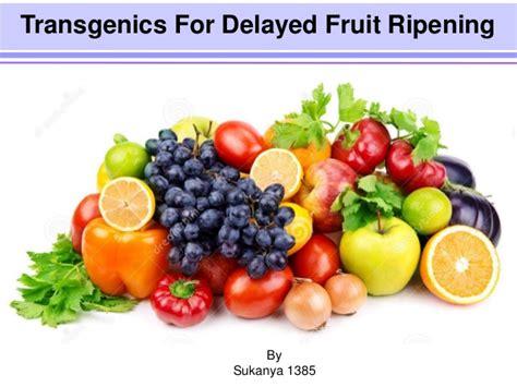 fruit ripening transgenics for delayed fruit ripening