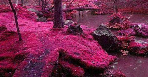 moss garden at saiho ji in kyoto japan beautiful creative art pinterest gardens
