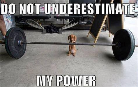 puppy power puppy power humor