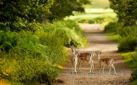 wildlife images   pixelstalknet