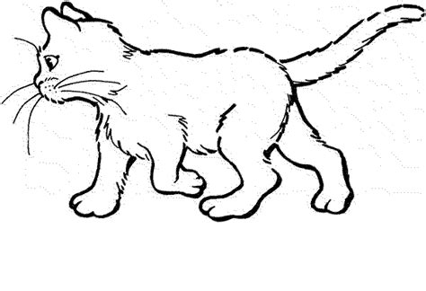 coloring pages of real cats realistic cat coloring pages bestappsforkids com
