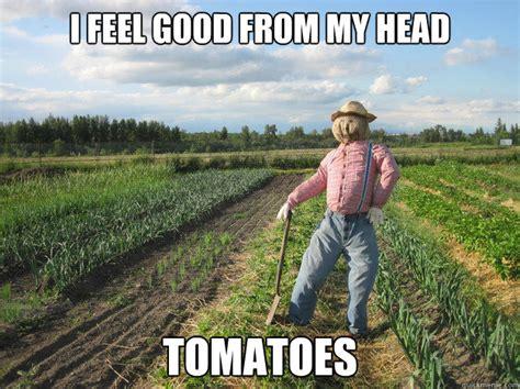 I Feel Good Meme - i feel good from my head tomatoes scarecrow quickmeme