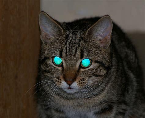 Farbe Die Im Dunkeln Leuchtet Für Aussen by Wie Sehen Katzen