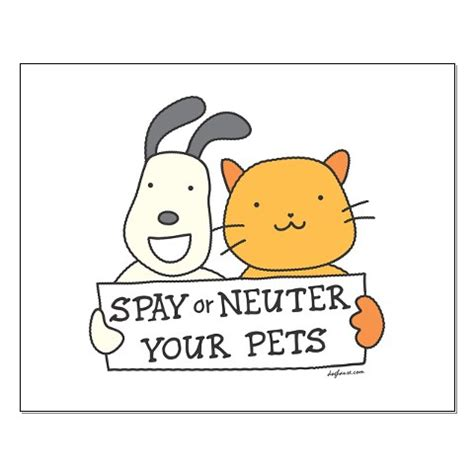 does neutering help with aggression in dogs neutering in tooting and streatham vale vets