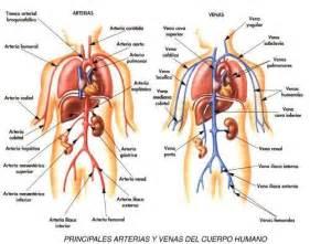 imagenes realistas del cuerpo humano mapa de venas y arterias del cuerpo humano eir