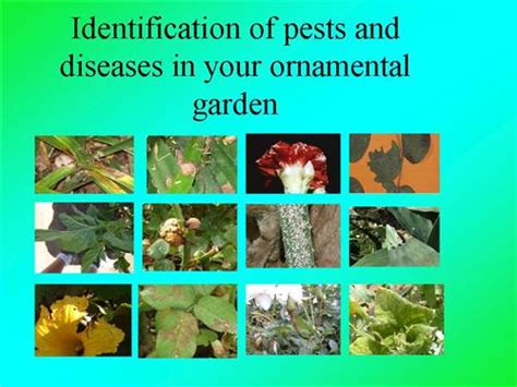 list of garden pests id of pests and diseases in your ornamental garden