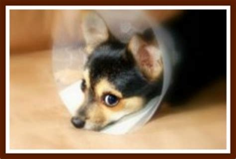 yorkie sick symptoms common symptoms of a sick to be aware of