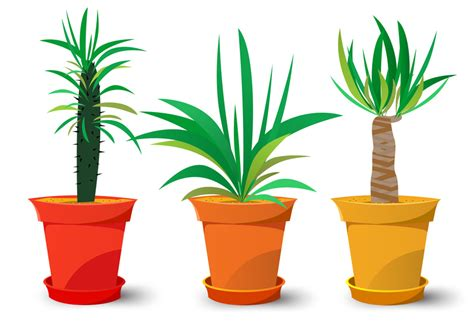 Easy Plants by Easy Plant Care Archives Plants By Bird