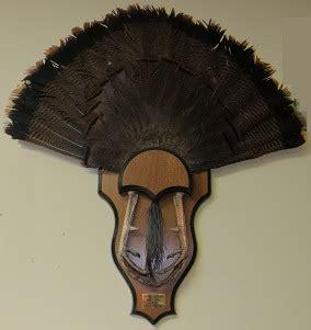 turkey fan mount template turkey taxidermy help ohio sportsman your ohio