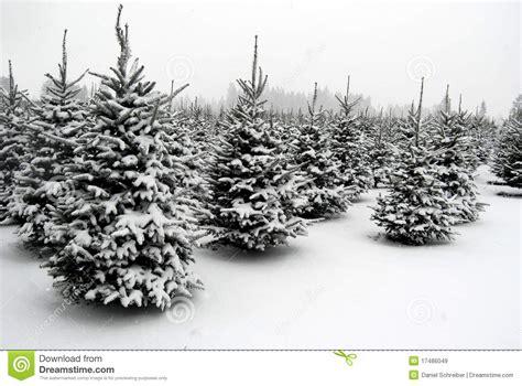 good christmas tree farm washington state snow at the tree farm stock image image of snow washington 17486049