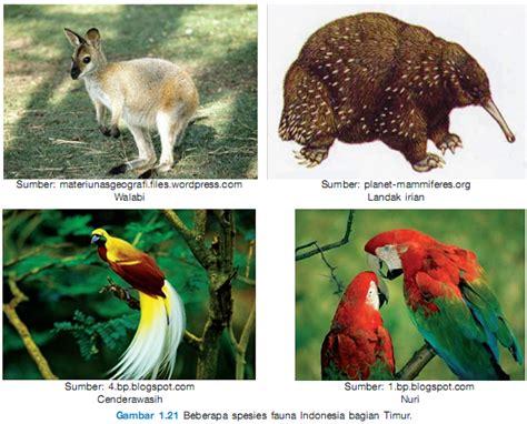 download film dokumenter flora dan fauna penggolongan sumber daya alam ips spensa manado caroldoey