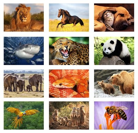imagenes de naturaleza varias animals wild zoo pets animal mammals nature print poster