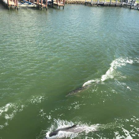 tin city boat tours double sunshine cruises naples fl updated 2018 top