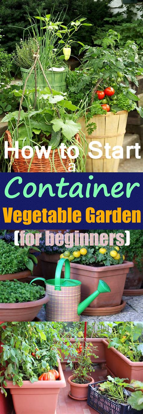 Growing Vegetables In Pots Starting A Container Starting A Small Vegetable Garden