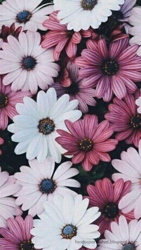 interesantes y bonitos fondos de escritorio de flores las 25 mejores ideas sobre fondos de pantalla tumblr en