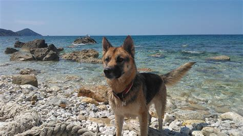 beaches where dogs are allowed beaches on the island of elba where dogs are allowed