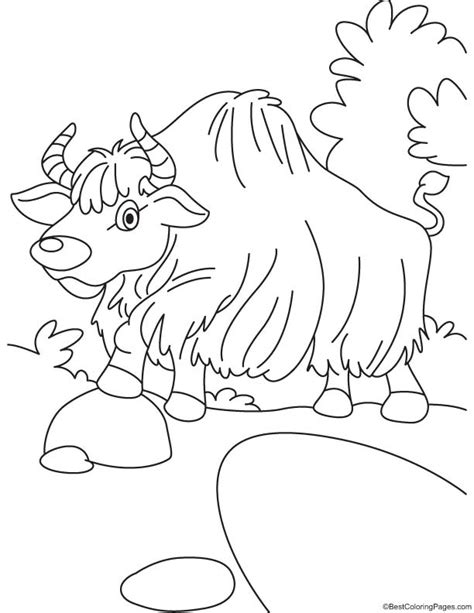 coloring page yak colouring pages yak y for yak coloring page