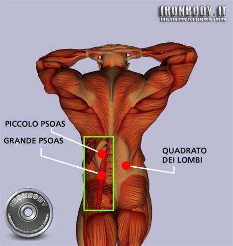 esercizi addominali obliqui interni building salento anatomia muscolare