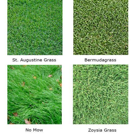 couch grass varieties couch grass varieties kikuyu grass couch grass buffalo
