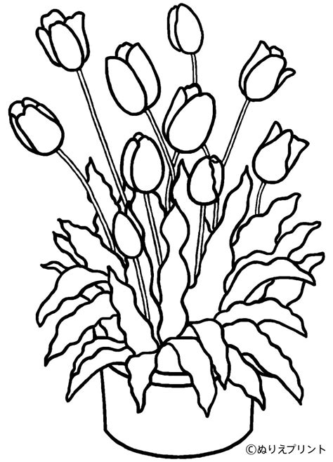 tulip leaf coloring page tulip 35 nature printable coloring pages