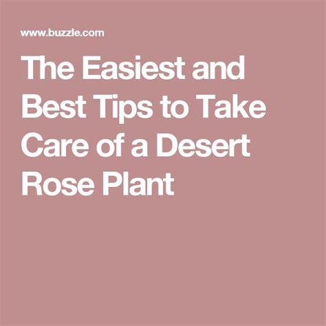 7 Tips On Taking Care Of Your by Best 25 Desert Ideas On Desert