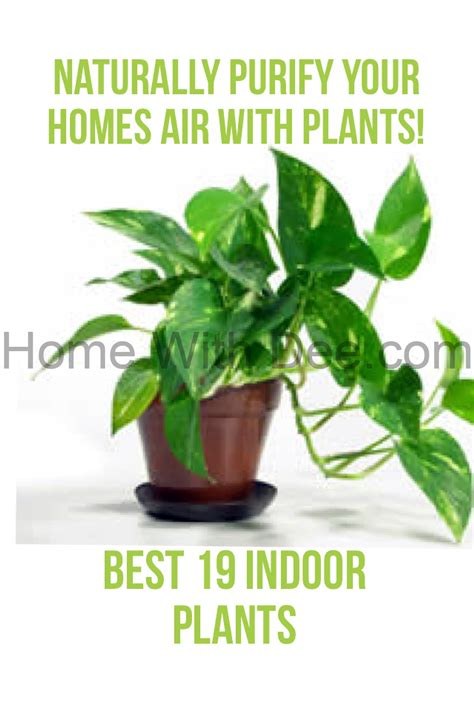 indoor plants to clean air indoor plants to clean air 28 images 9 houseplants to