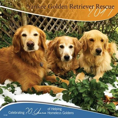 new golden retrievers golden retriever rescue new assistedlivingcares