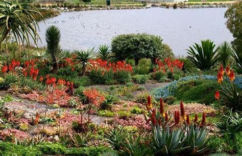 giardino di piante grasse concime piante grasse piante grasse concimare le