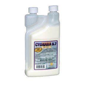 commercial bed bug spray get rid carpet beetles carpet beetles carpet cleaning