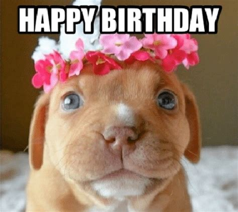 Puppy Birthday Meme - birthday meme dog 100 images happy birthday wishes for dog quotes images memes happy wishes