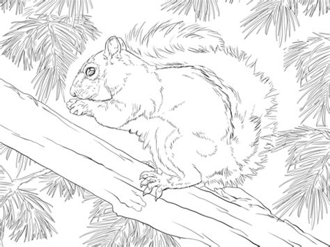 coloring page of a gray squirrel grey squirrel coloring coloring pages