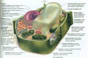 Labeled Diagram Of A Plant Cell » Home Design 2017