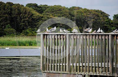 cape may bird sanctuary stock photo image 65040036