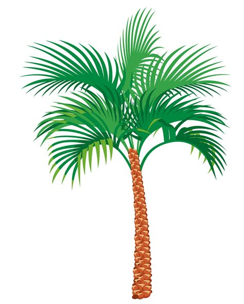 palm tree clip palm tree illustration clipart free stock photo