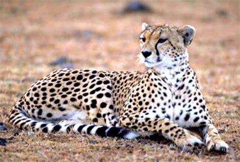 imagenes animales terrestres imagenes de animales terrestres animados imagui
