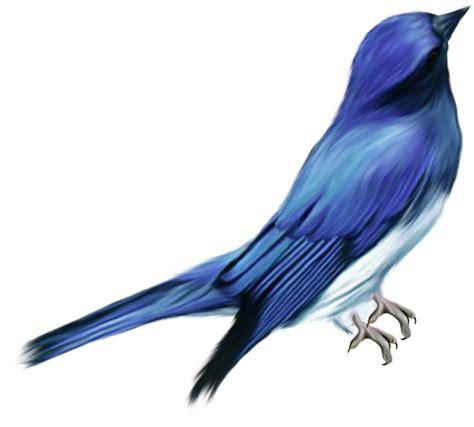 imagenes de aves sin fondo mariajose aves png